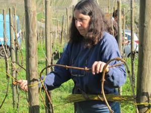Yvette attache une vigne au saule