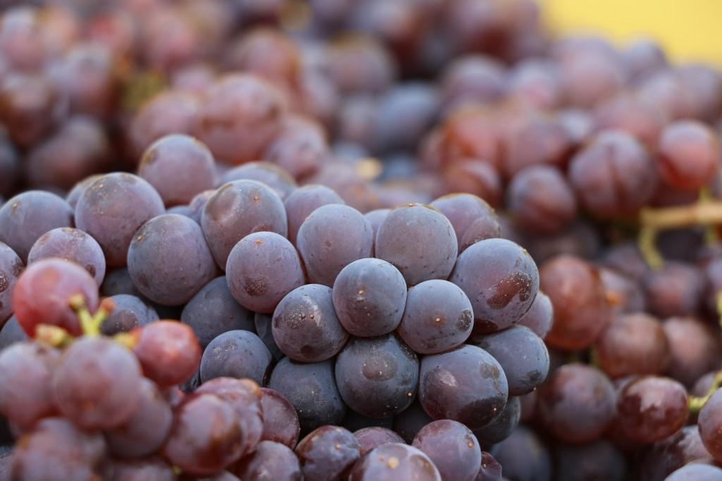 Pinot gris Dambach