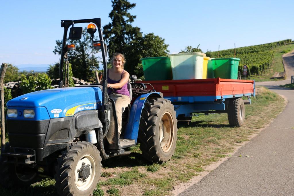 Mathilde transporte les raisins à la maison